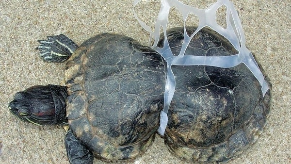 save the turtles, recycle